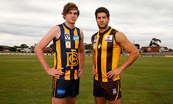 Box Hill Hawks vs Bendigo Gold Preview