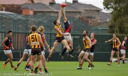 Development: Hawks demolish Coburg in season-opener