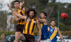 Grand Final Preview & Team: Box Hill vs. Williamstown