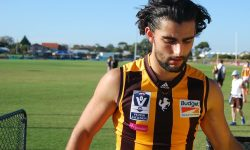Dimasi's Second Year in the Brown and Gold
