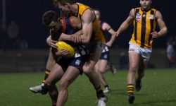 Tough Night for the Box Hill Hawks Seniors