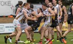 Box Hill to face Werribee
