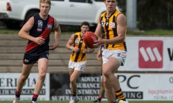 Hawks and lions all square in final hit out