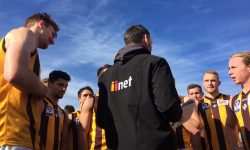 Hawks named in VFL team's of the Year