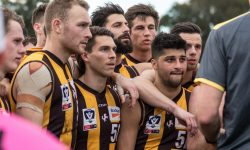 Elimination Final Preview: Box Hill v Werribee